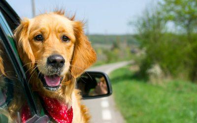 Honden: welkom in mijn vakantiewoning?