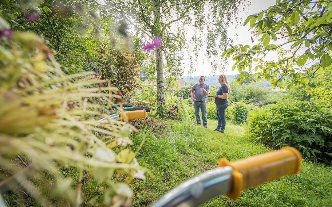 Kom alles te weten over de tuinhaag: wanneer, wat, waarom en hoe?