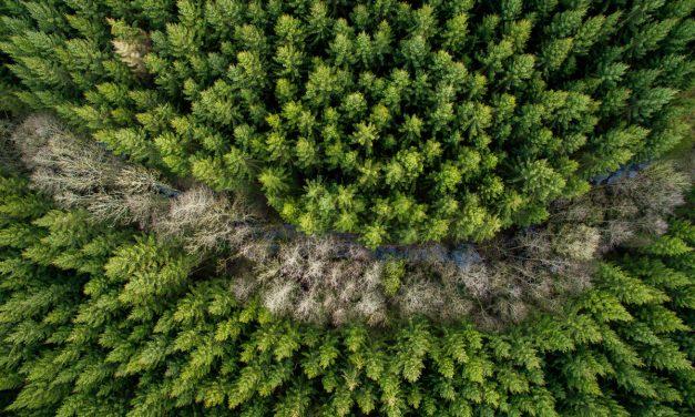 Het woudbad, een natuurlijk en gratis antistressmiddel