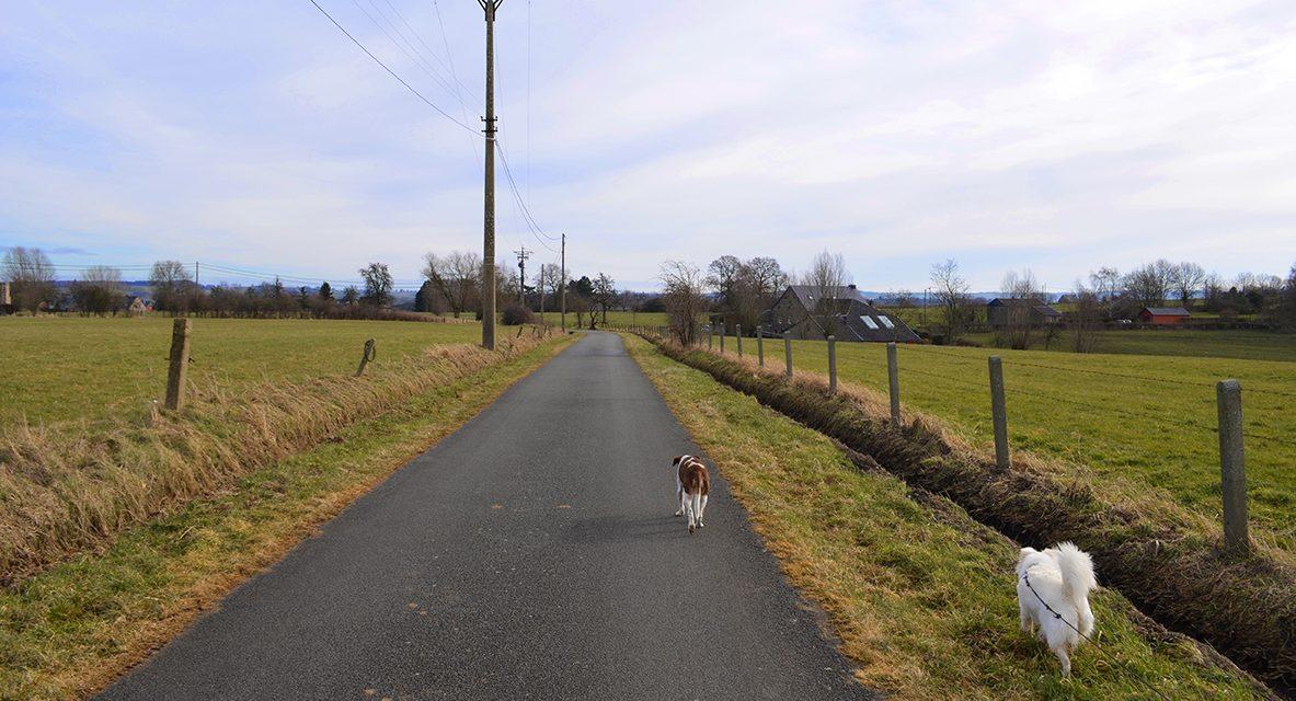 Op stap met onze honden : wandeling op het plateau van Herve