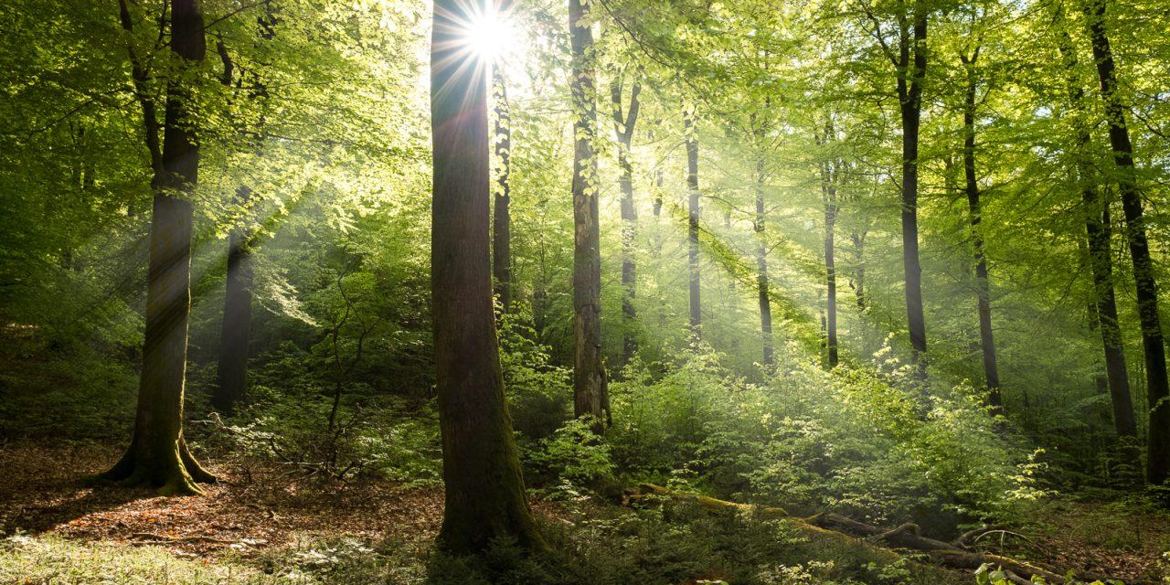 De vier seizoenen van de Ardennen