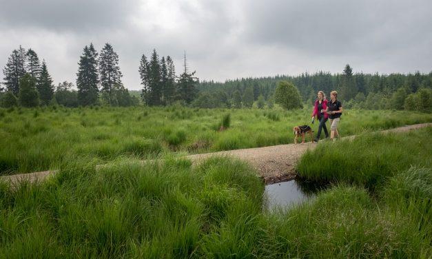 Waar gaan wandelen met je hond in de Hoge Venen?