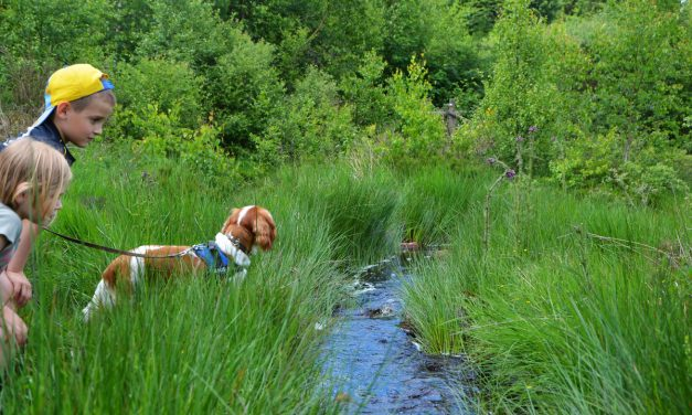 Wandeling met de hond in het plateau des Tailles