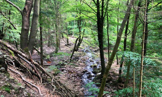 Prachtige boswandeling in het Hertogenwald – Hoge Venen
