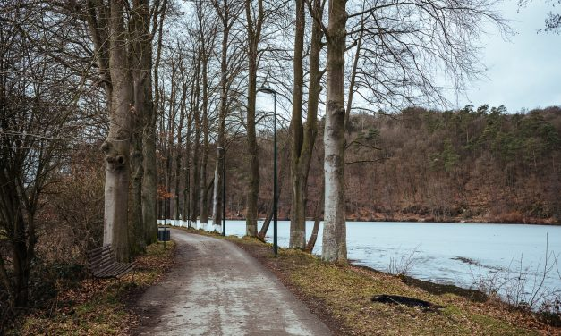 Boswandeling in Spa rond het meer van Warfaaz