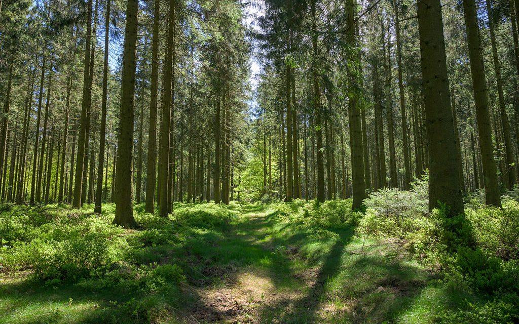 7 tips om de natuur te respecteren tijdens je wandeling in de Ardense bossen