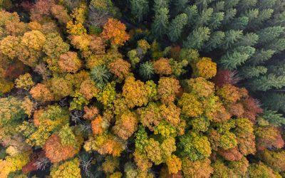 Indian summer in de Ardennen: 6 dingen die je zeker moet doen