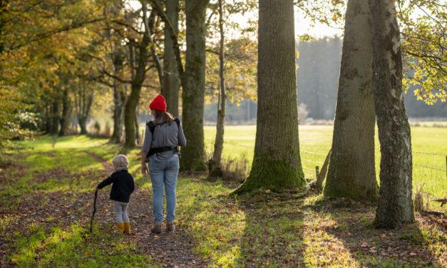 TOP 5: ontdek onze mooiste herfstwandelingen in de Ardennen