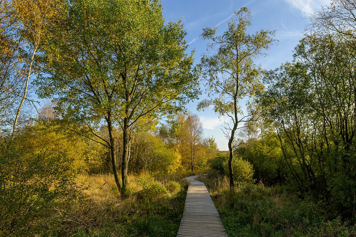 Top 5 Ontdek Onze Mooiste Herfstwandelingen In De Ardennen Ardennes Etape