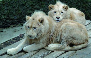 Dierenpark van Bouillon-Parcs-animaliers tot Provincie Luxemburg