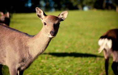 Forestia Dierenpark-Parcs-animaliers tot Provincie Luik