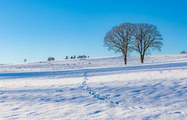 Skipiste van Maugires-Ski de fond tot Provincie Luxemburg