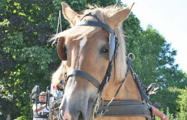 Tocht met een Ardense paardenkoets-Promenades âne-cheval-attelage tot Provincie Luxemburg